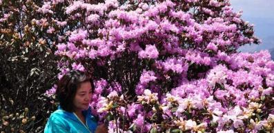 5月 一起去会理赏杜鹃花可好?